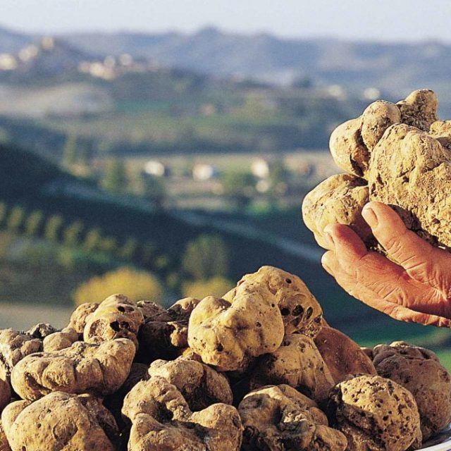 12-Most-Expensive-Foods-in-the-World-Italian-White-Truffle-1080x675